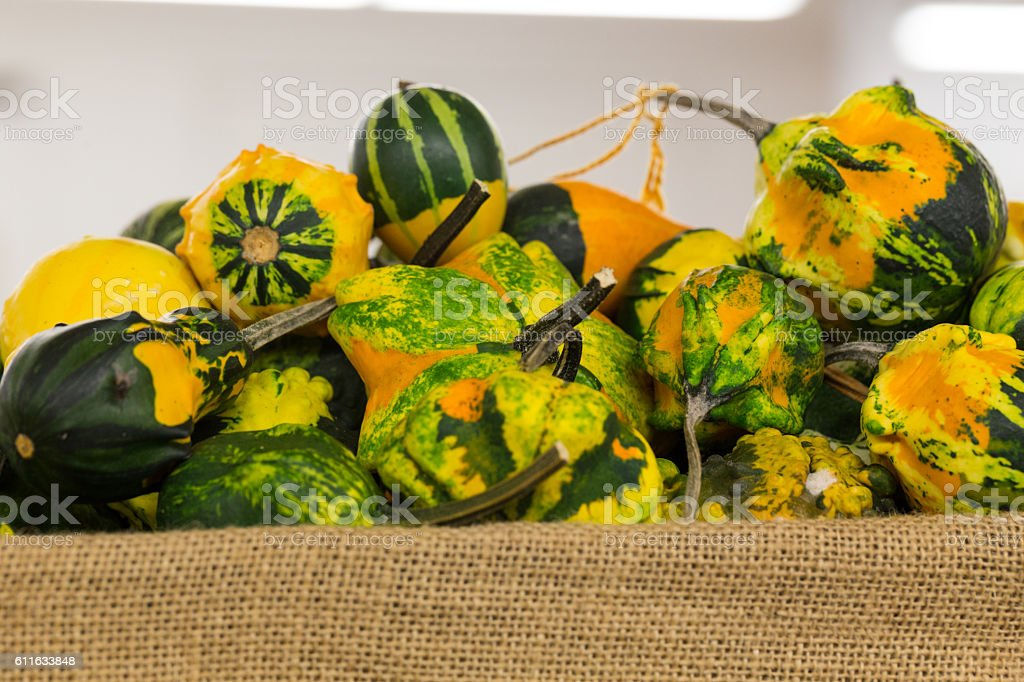 Colorful Fall Gourds in Basket stock photo