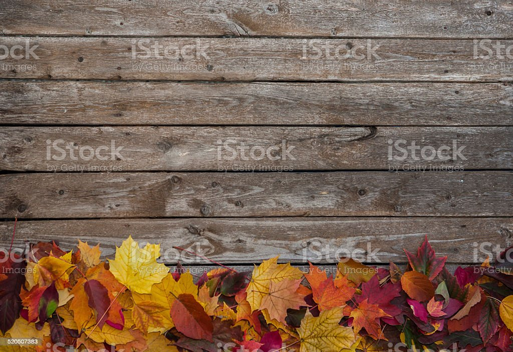 colorful fall leaves bottom border backgournd stock photo