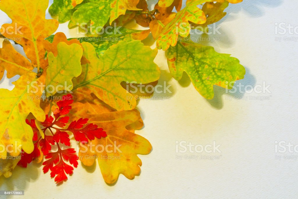 Colorful fall leaves on white background for text stock photo