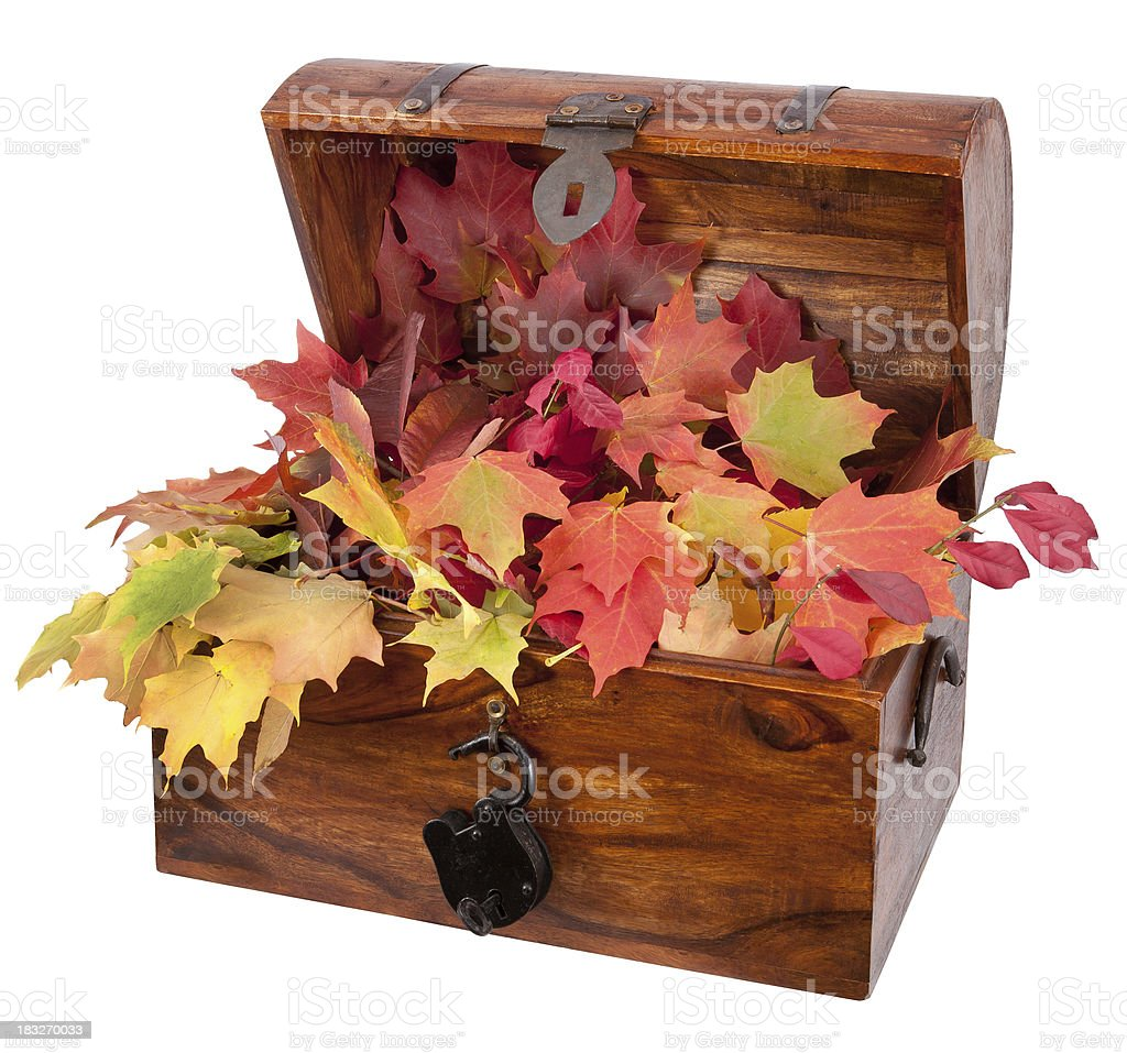 colorful fall leaves treasure chest stock photo
