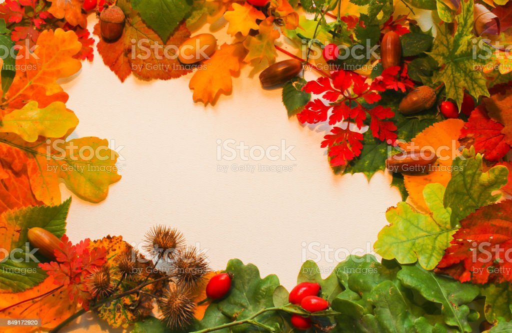 Colorful fall leaves with acorn and brier arranged to frame on white background for text stock photo