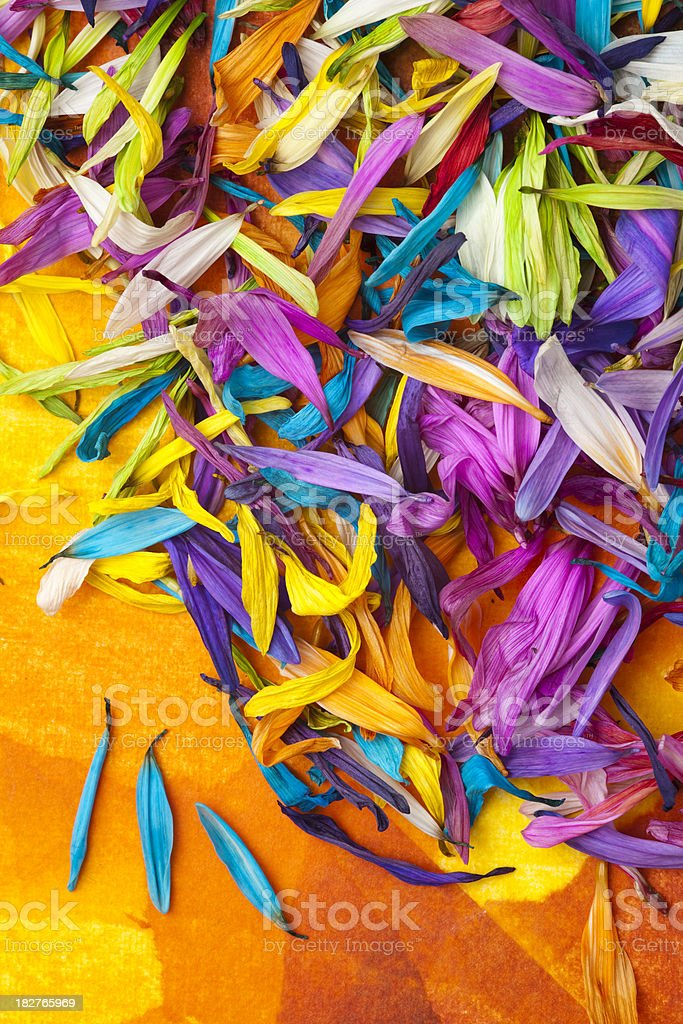 Colorful Fallen Flower Petals royalty-free stock photo