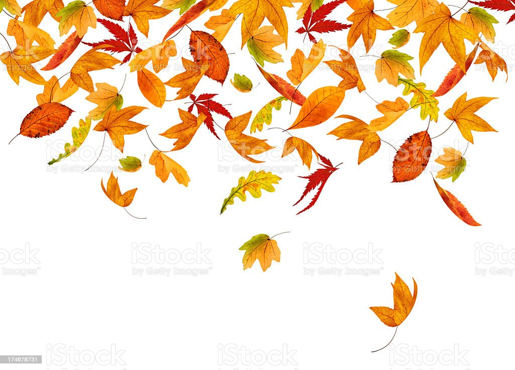 Colorful Falling Autumn Leaves royalty-free stock photo