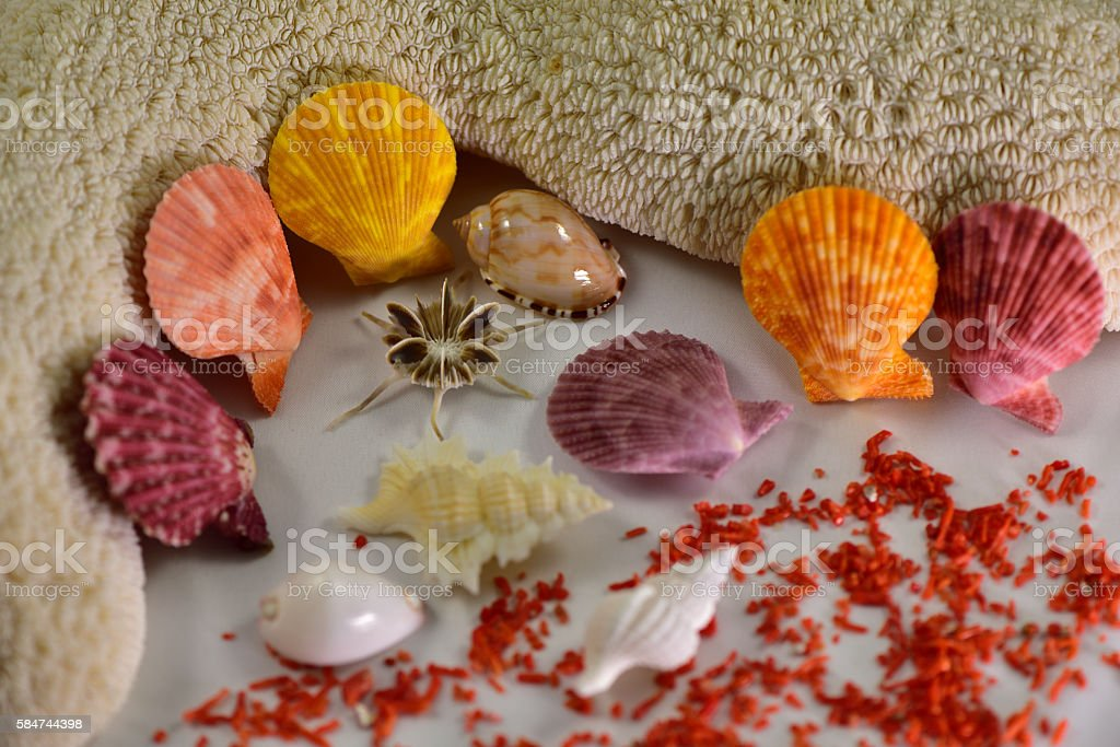 Colorful fan-shape shells and other shells stock photo