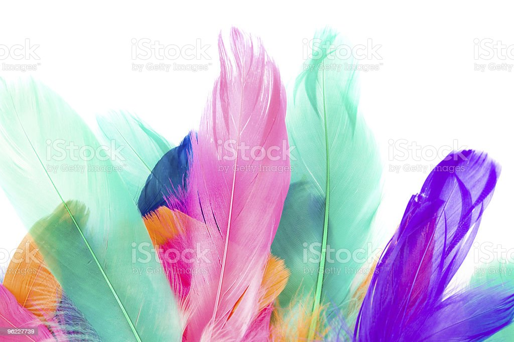 Colorful Feather stock photo
