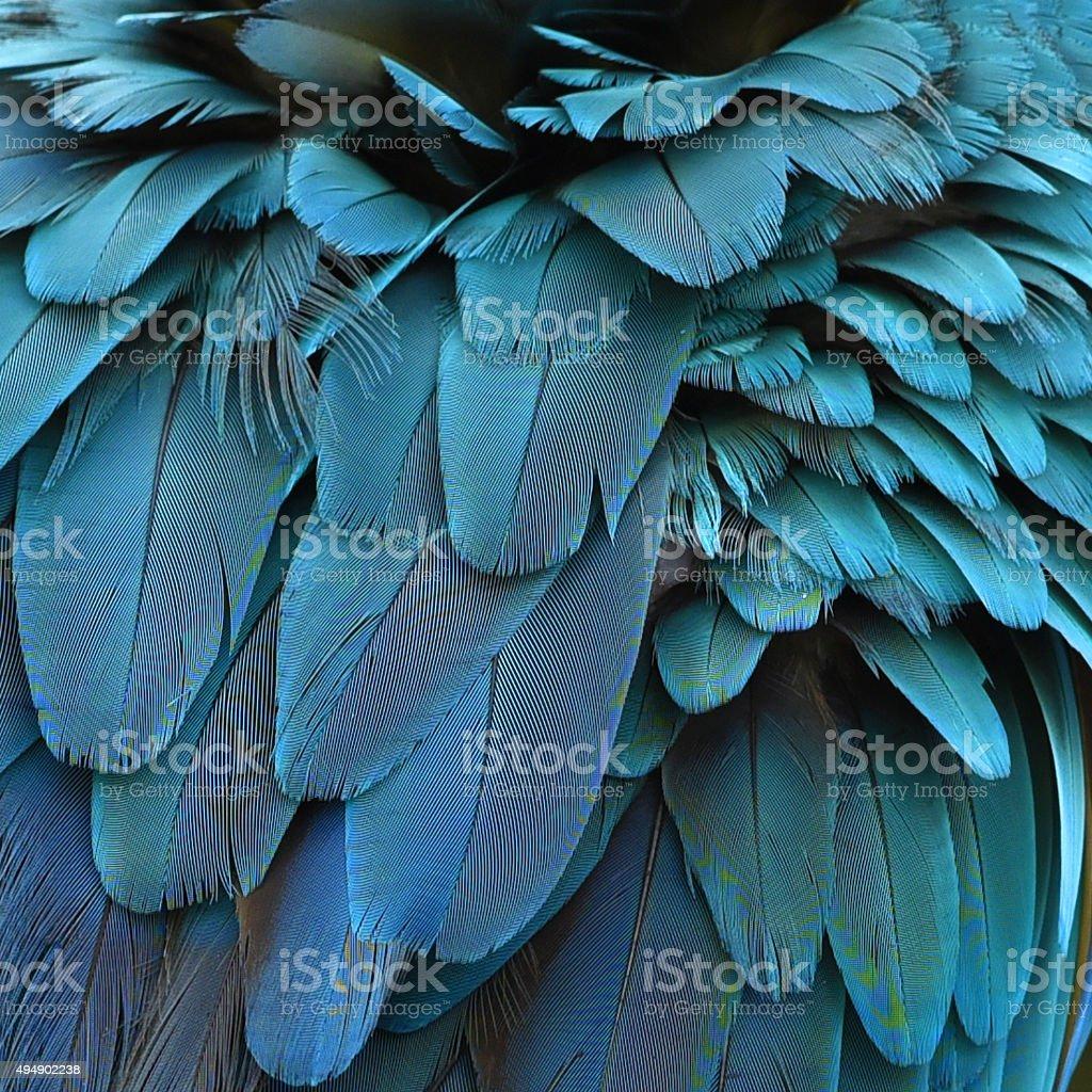 Coloré de plumes Ara bleu et or fond de plumes de texture photo libre de droits