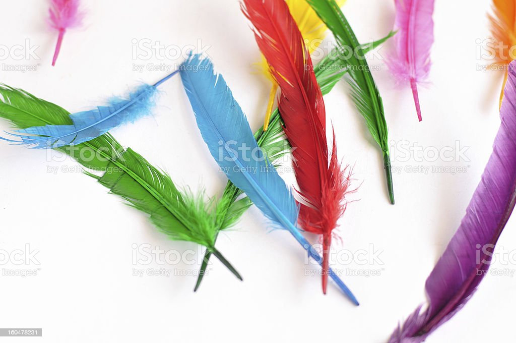 colorful feathers isolated on white background royalty-free stock photo