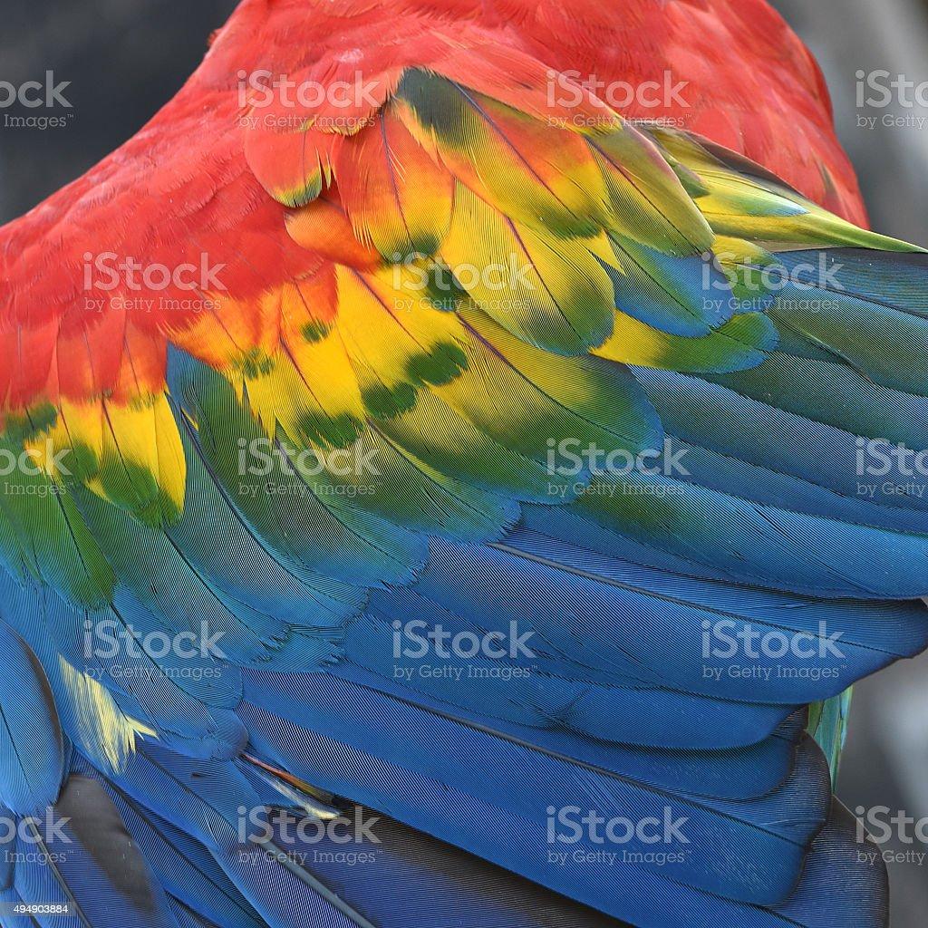 Plumes Ara rouge coloré de plumes fond de texture photo libre de droits