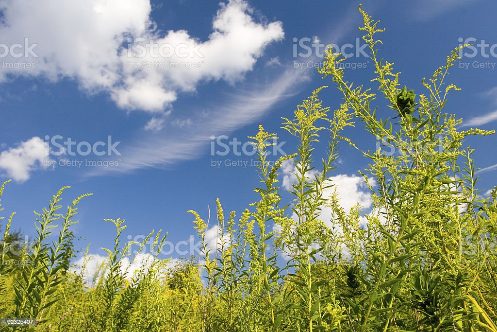Colorful Field 1 royalty-free stock photo