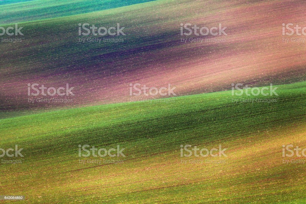 Colorful fields in the evening in South Moravia stock photo
