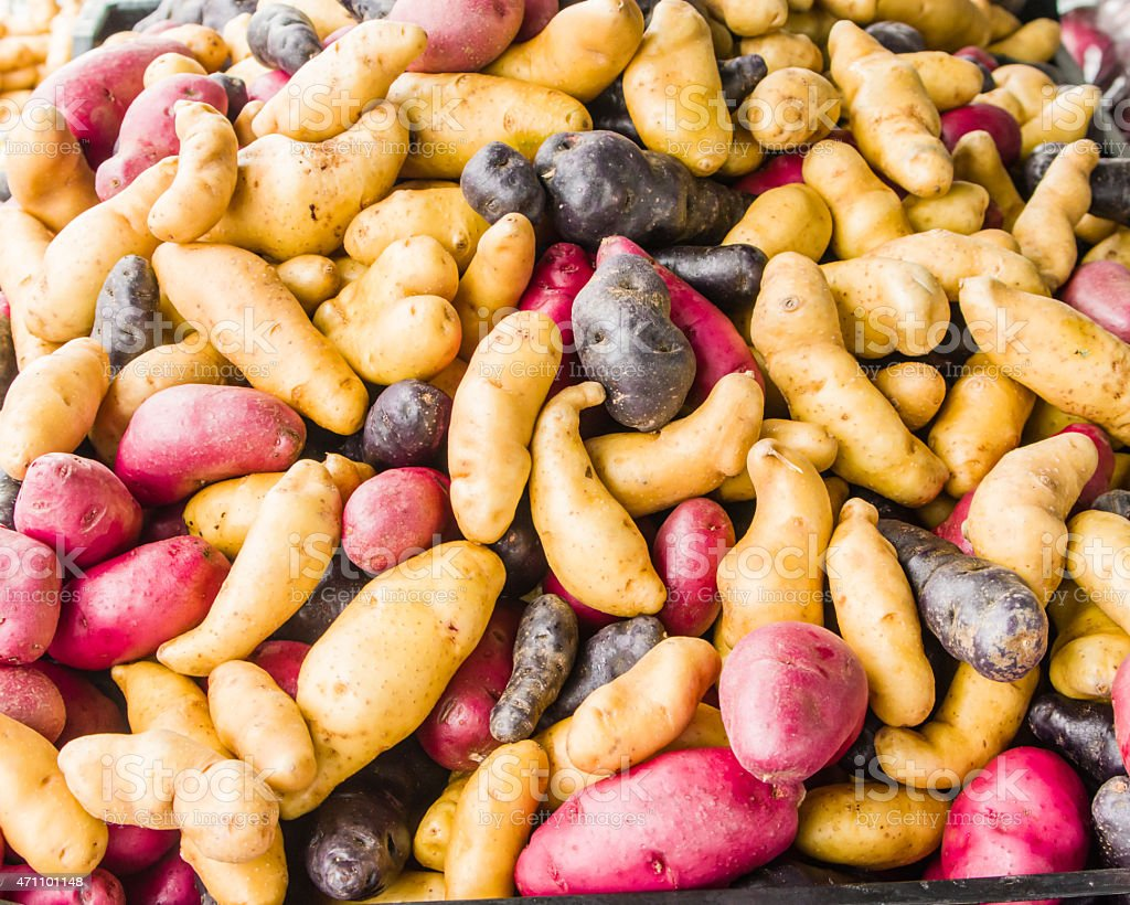 Colorful fingerling potatoes at the market stock photo