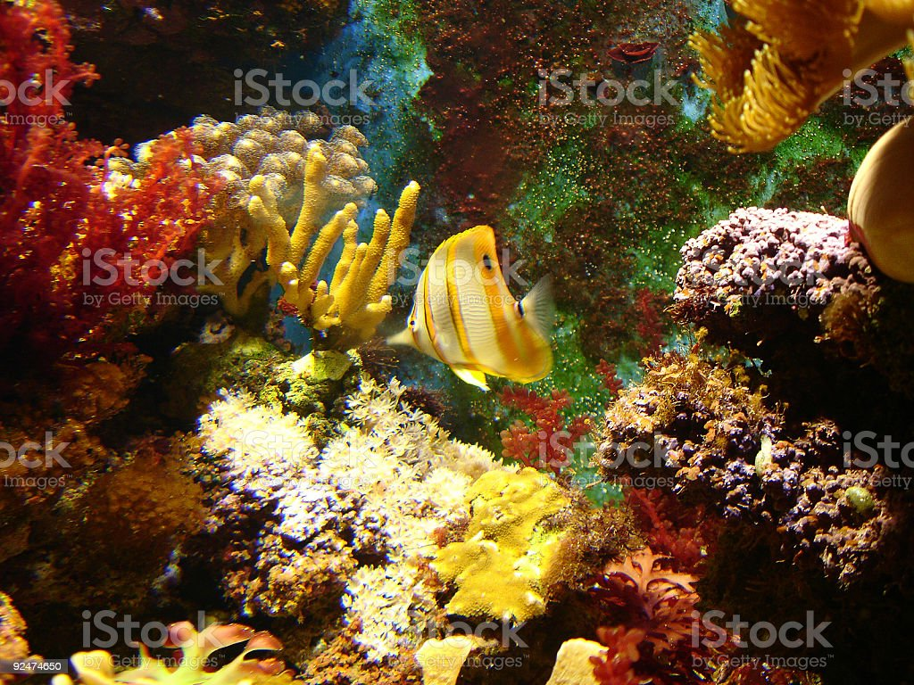Colorful fish and corals! royalty-free stock photo