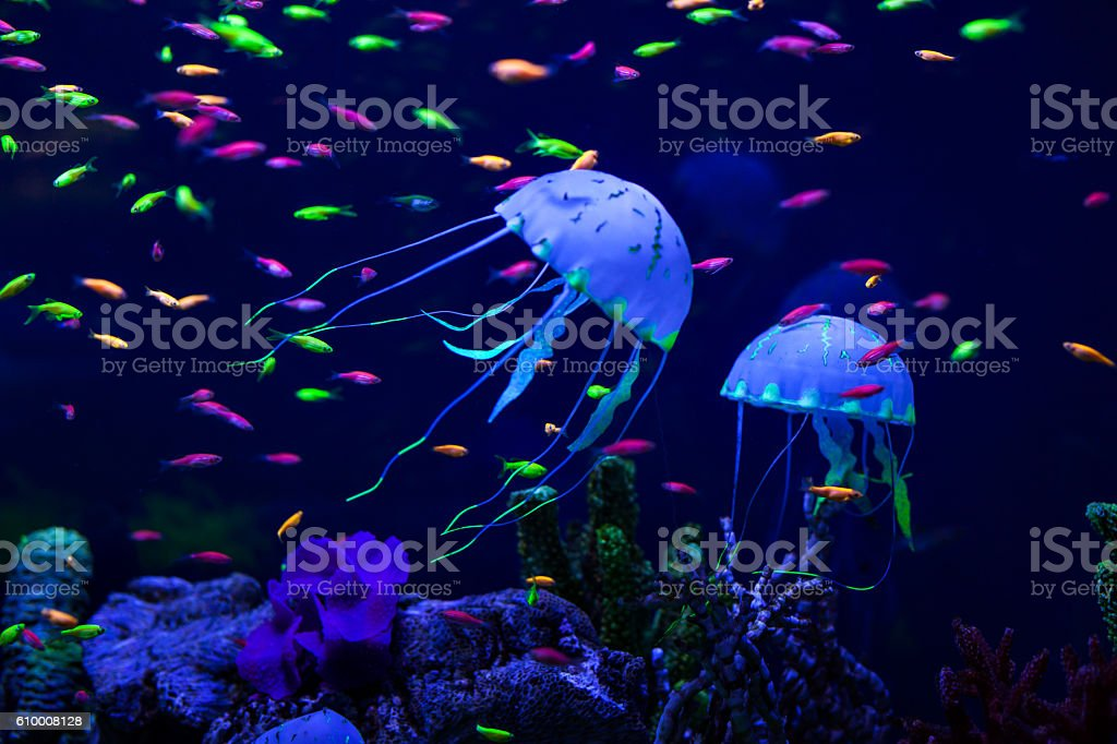 Colorful fish and jellyfish. stock photo