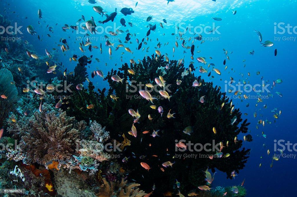 Colorful Fish and Reef in Raja Ampat stock photo