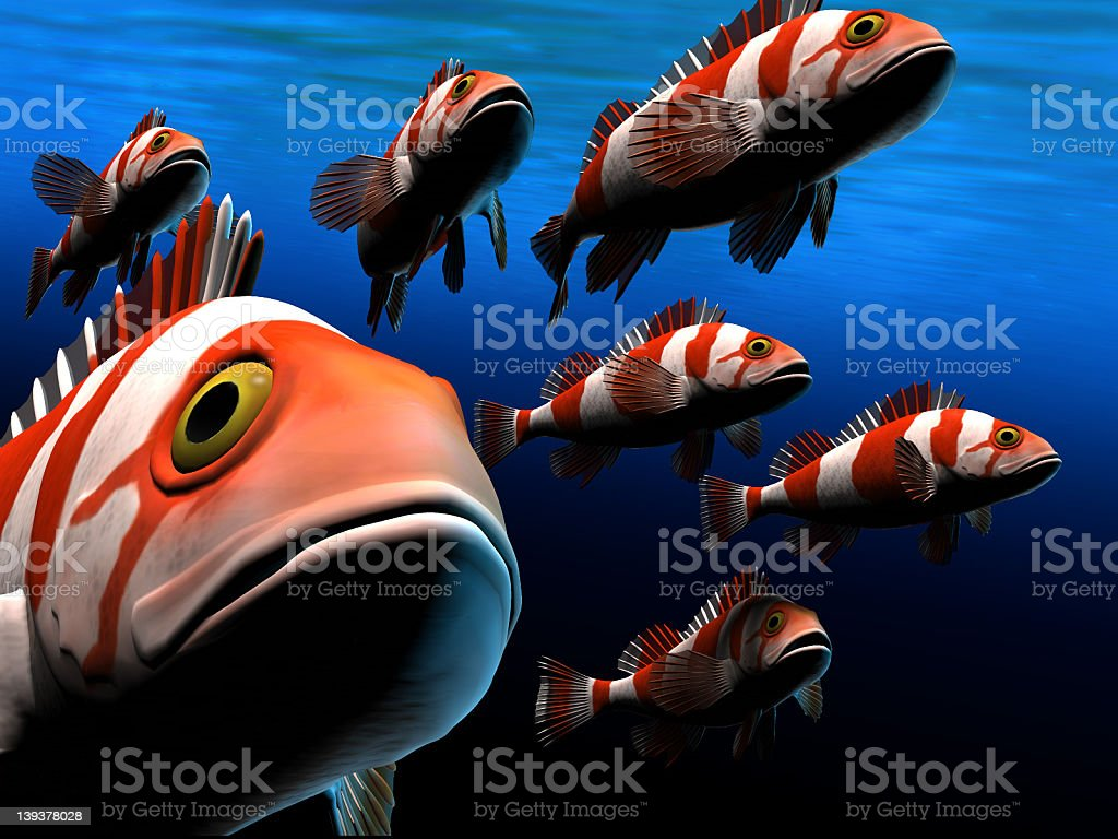 Colorful Fish royalty-free stock photo