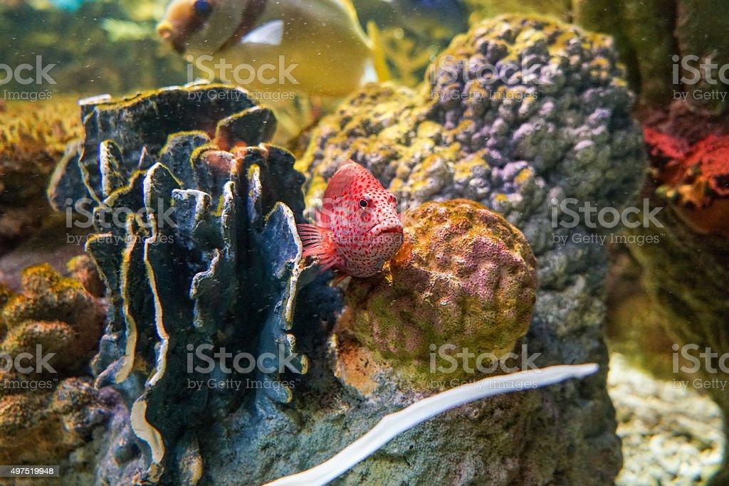 Colorful Fish stock photo