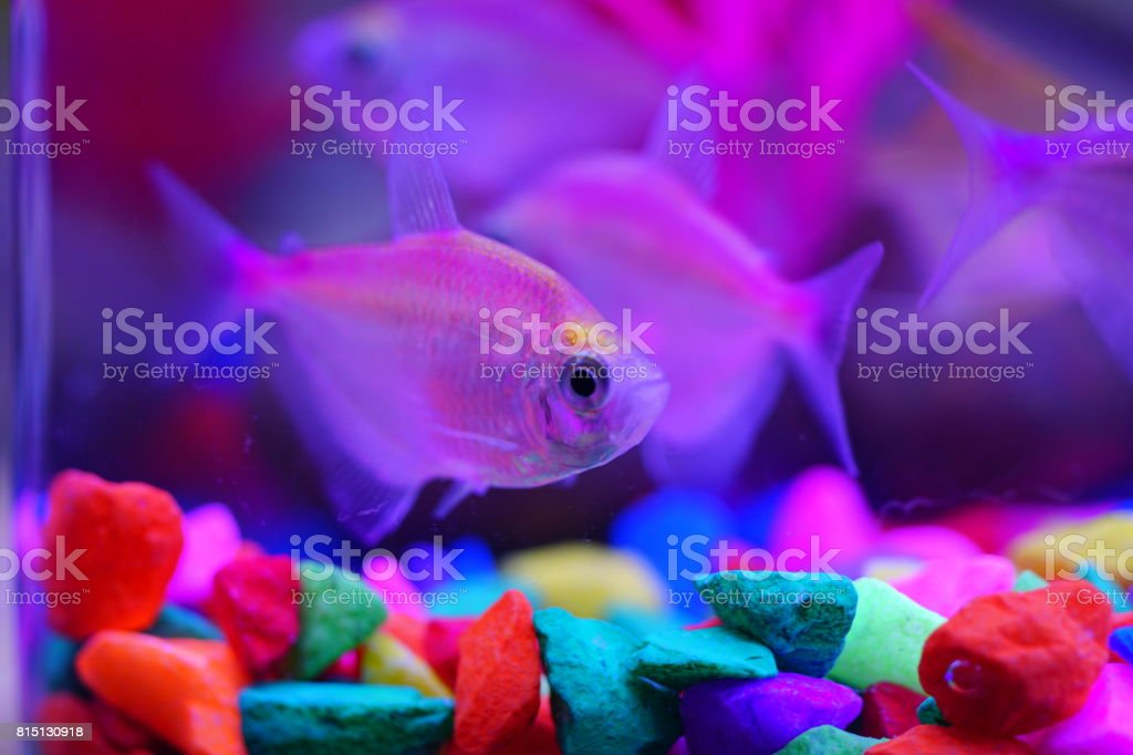 Colorful fishes and corals in the aquarium stock photo