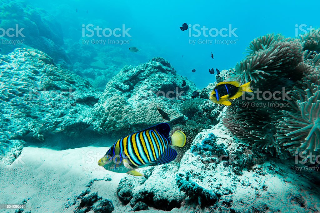 Colorful Fishes in Bora Bora, French Polynesia stock photo
