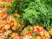 colorful floral detail