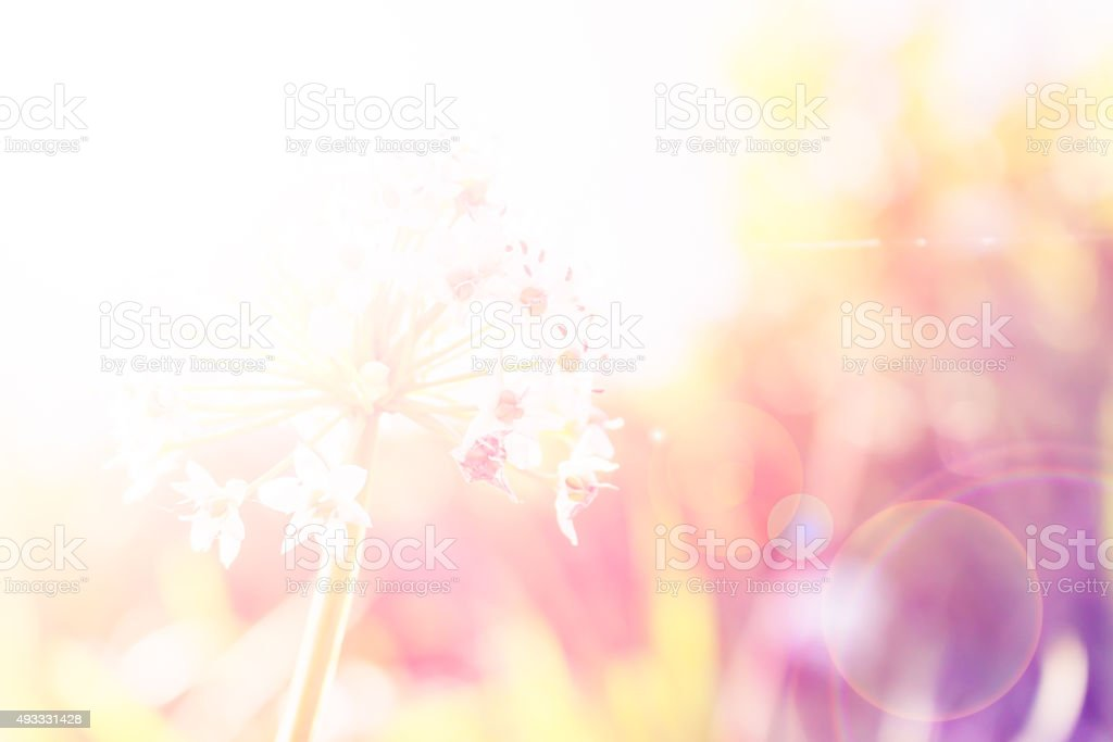 Colorful Flower background Out of focus with soft filter stock photo