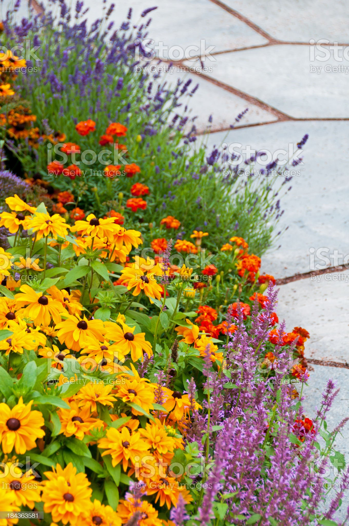 Colorful flower bed next to slate path royalty-free stock photo