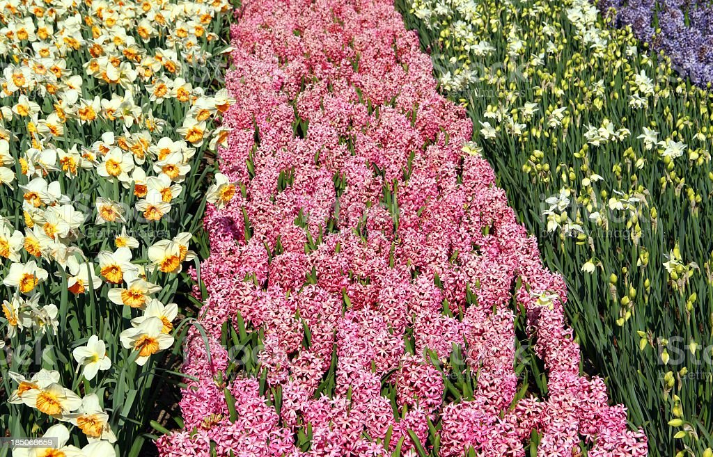 Colorful flower bed royalty-free stock photo