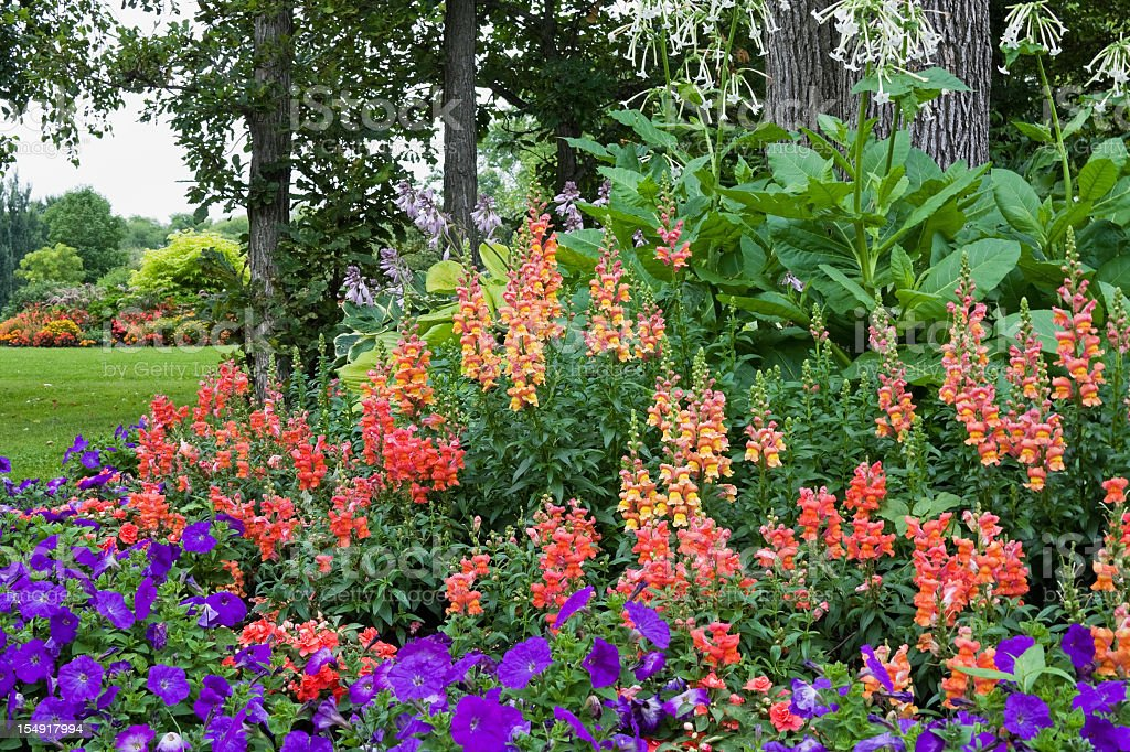Colorful Flower Garden royalty-free stock photo