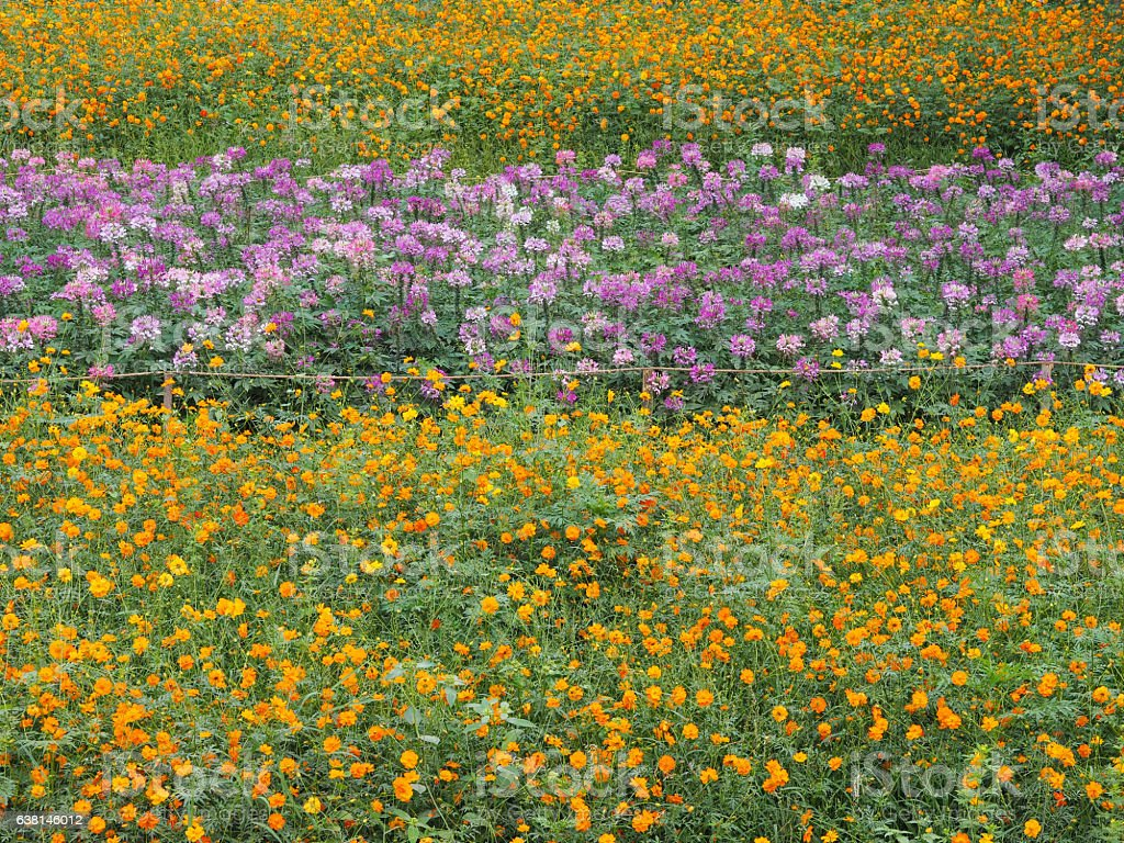 Colorful flower meadow in farm stock photo