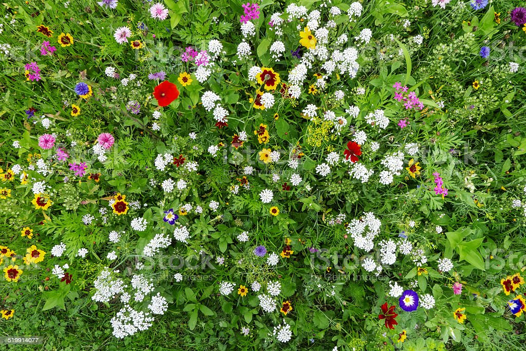 Colorful flower meadow royalty-free stock photo