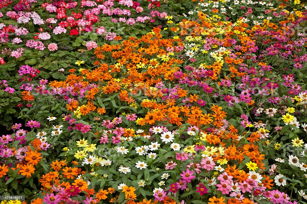 Colorful Flower Mix royalty-free stock photo
