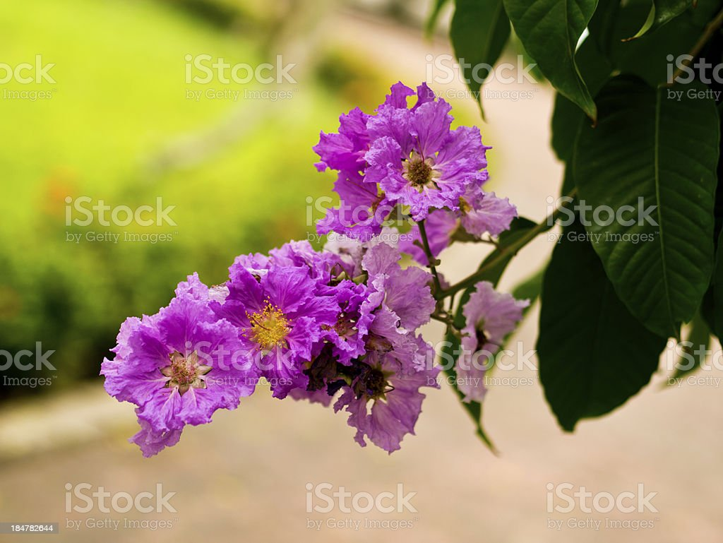 colorful flower royalty-free stock photo