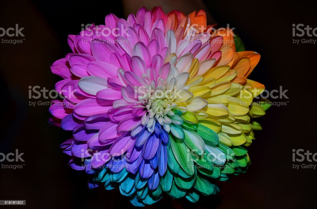 Colorful Flower stock photo
