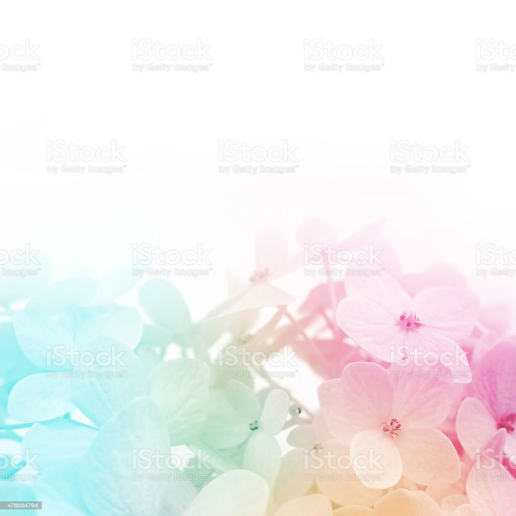colorful flowers background, fresh summer in soft style stock photo