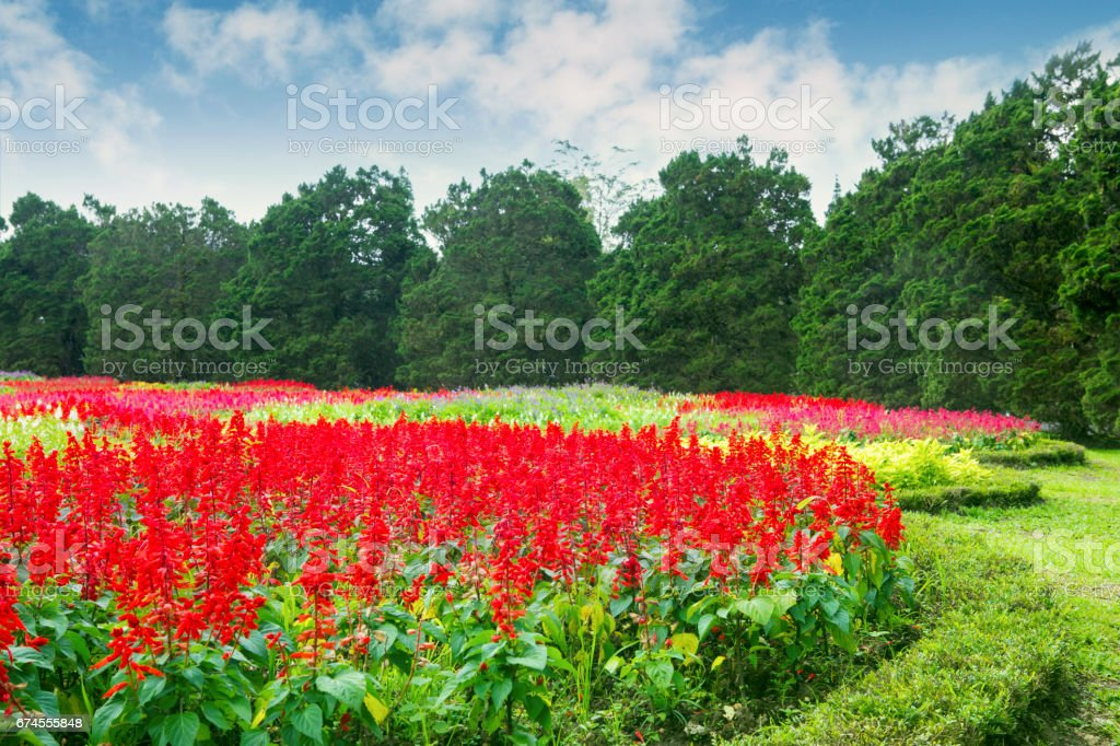 Colorful flowers blooming in the garden stock photo