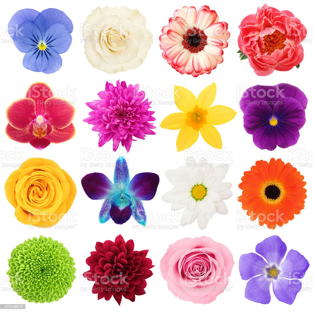 Colorful Flowers Collection (with path) stock photo