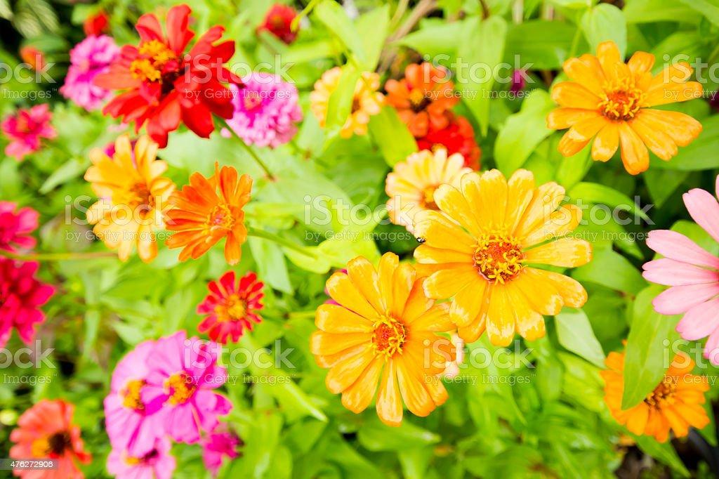 Colorful flowers. focus on orange flower royalty-free stock photo