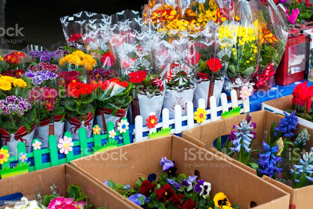 Colorful flowers for sale stock photo
