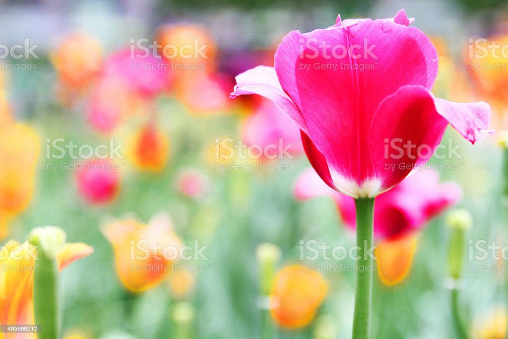 Colorful flowers in a park royalty-free stock photo