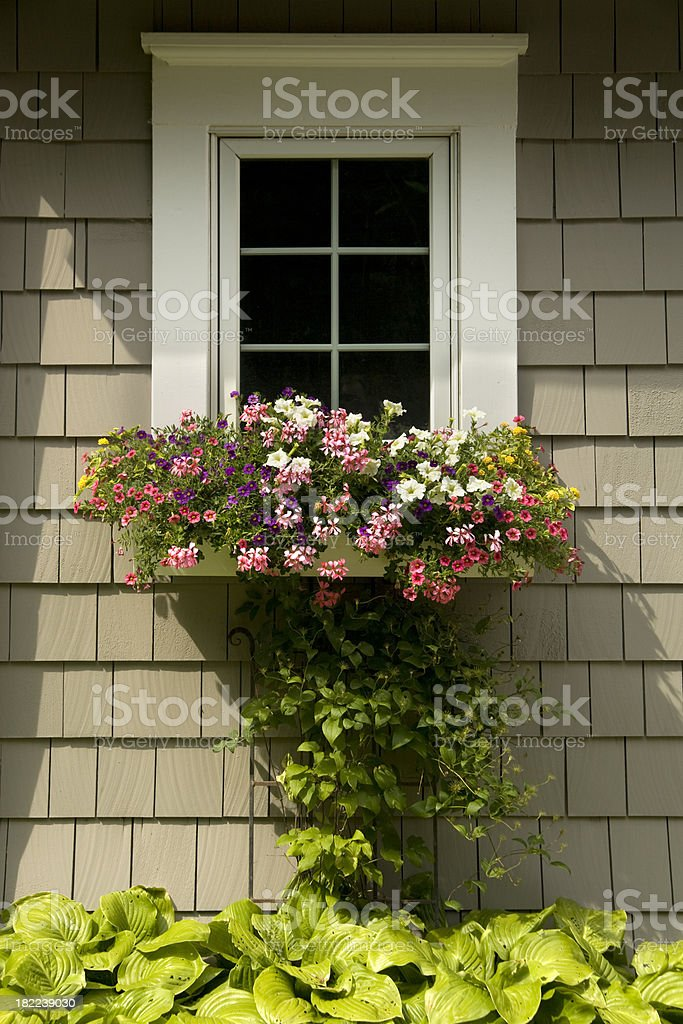 Colorful flowers in a window box. royalty-free stock photo