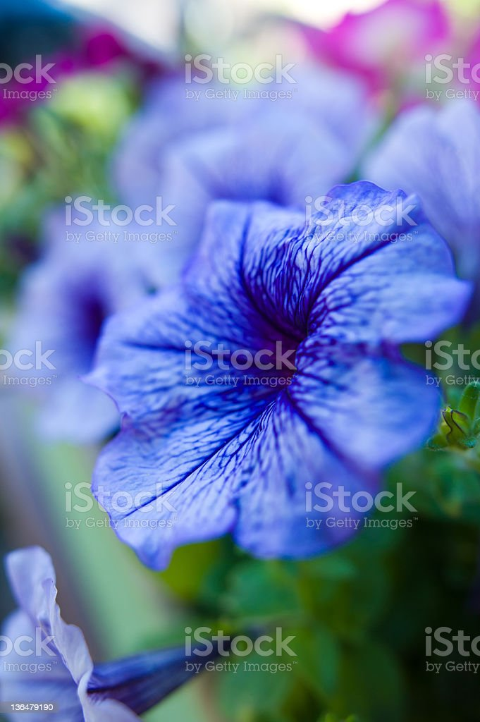 Colorful Flowers in Garden Flower Box stock photo