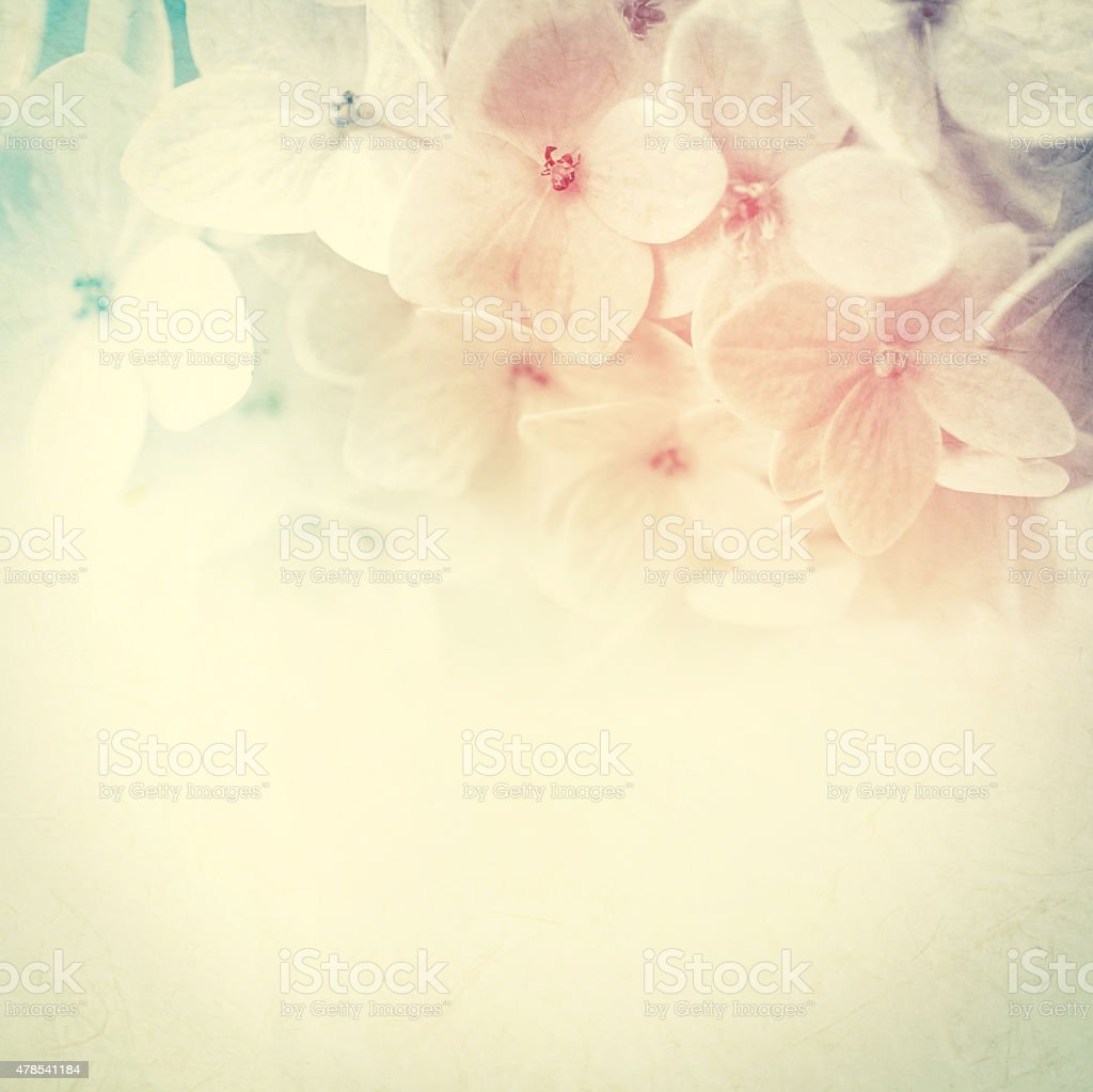 colorful flowers in soft color and blur style stock photo
