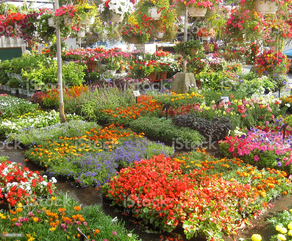 Colorful flowers in the Market, Montreal Canada stock photo