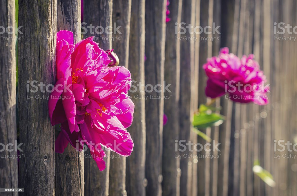 colorful flowers stock photo