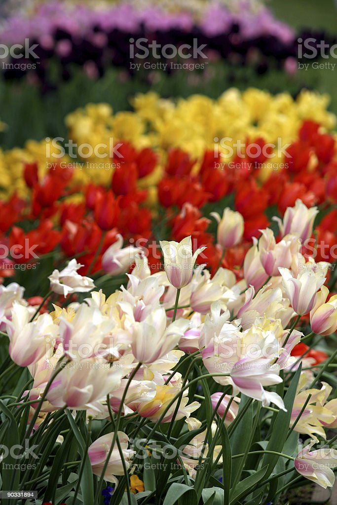 Colorful flowers royalty-free stock photo