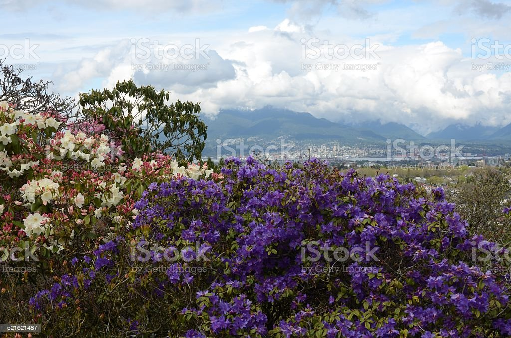 Colorful Flowers with City Backdrop royalty-free stock photo