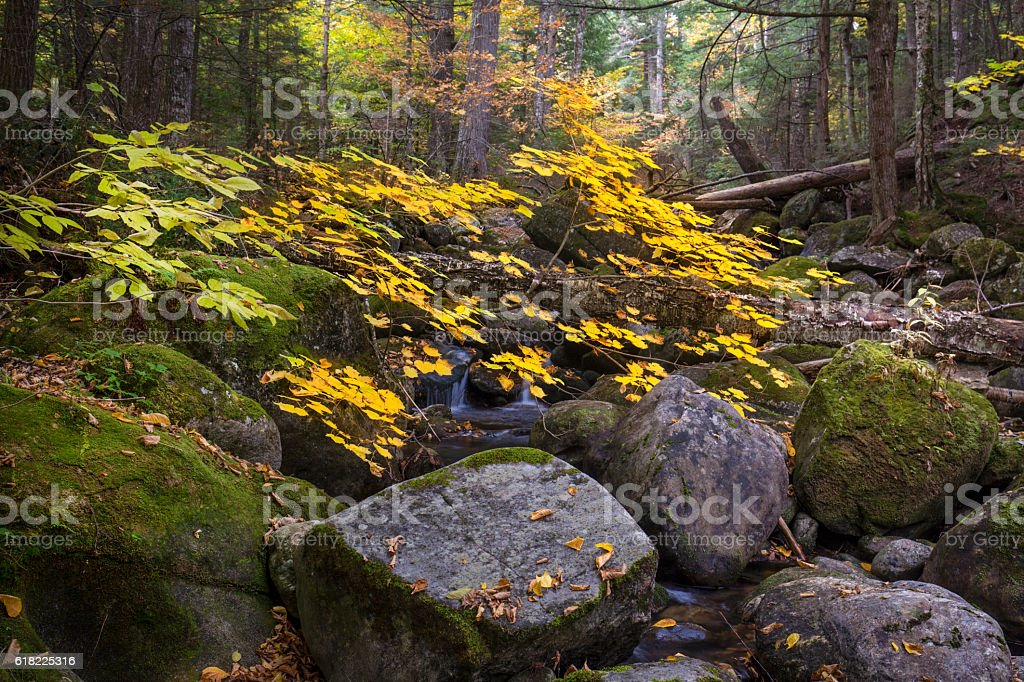 Colorful foliage along Snyder Brook in New Hampshire's White Mountains. stock photo