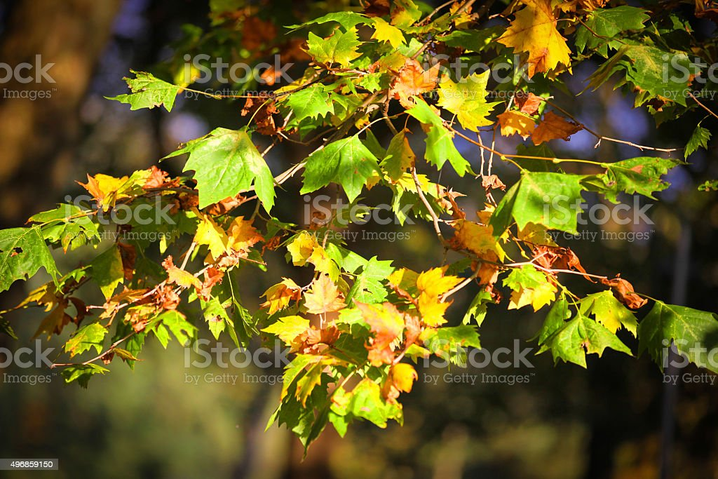 Colorful Foliage in Autumn stock photo