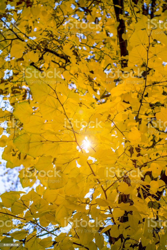 Colorful foliage in the autumn park. Golden leaves on branch, autumn wood with sun rays, beautiful landscape. stock photo