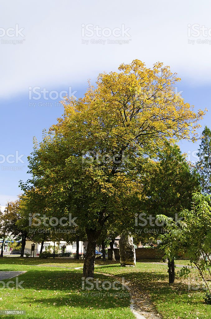 Colorful foliage in the autumn park royalty-free stock photo