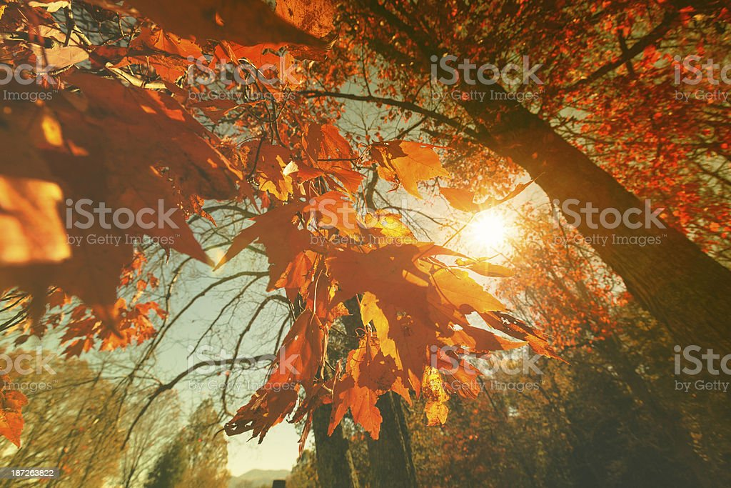 Colorful Forest during Autumn royalty-free stock photo